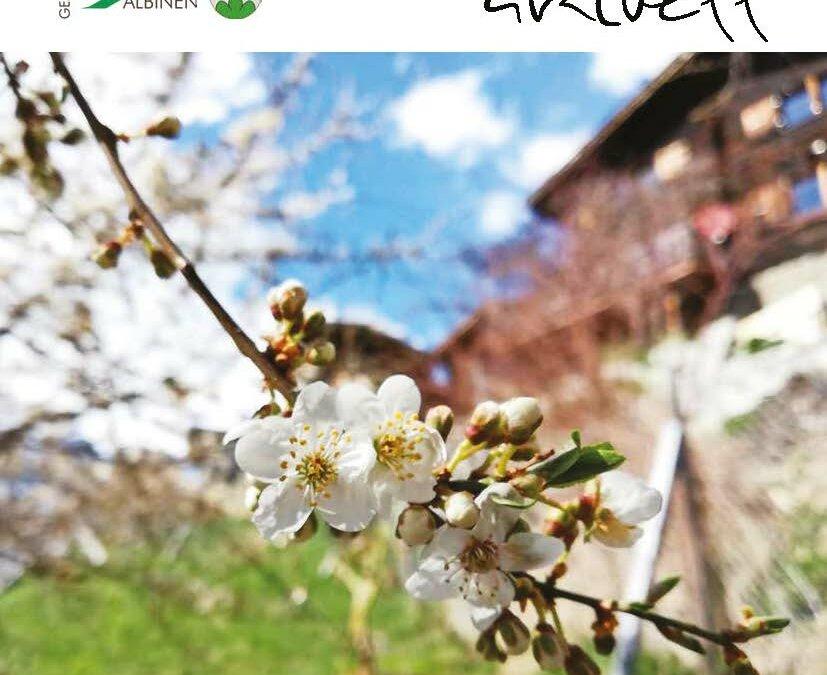 """Neues """"Albinen aktuell"""" auf dem Weg in die Haushalte"""