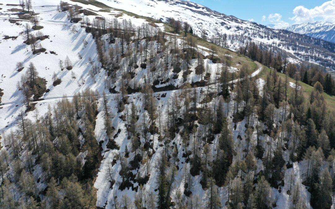 Wanderwegsperren wegen Schutzwaldpflege im «Dorbugraben»