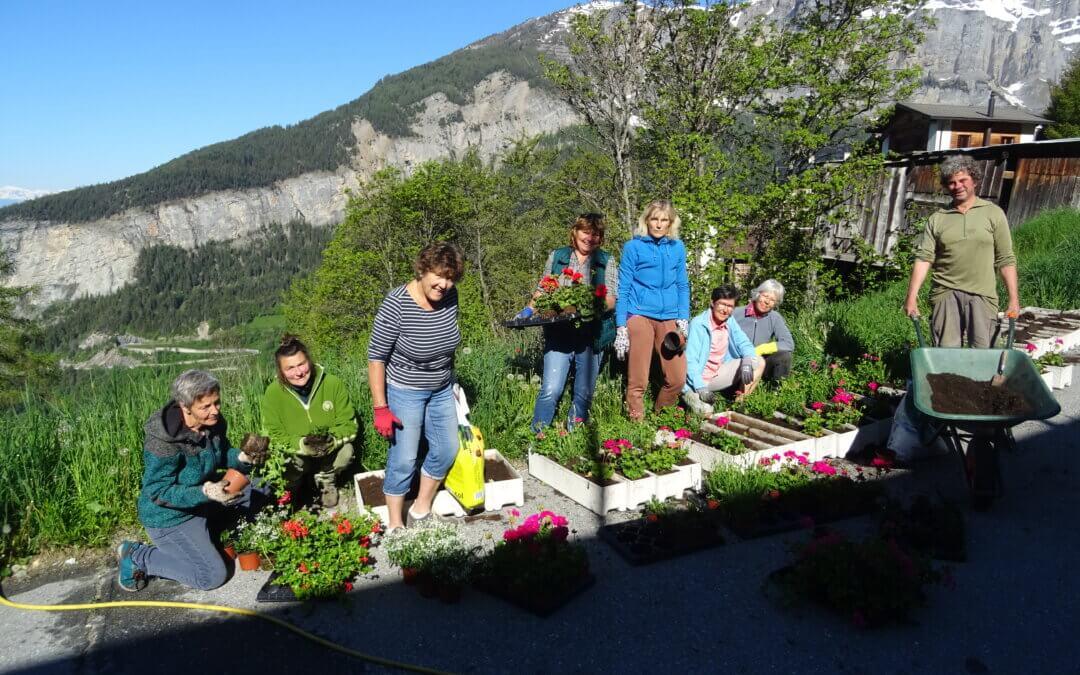 Albiner Frauen pflanzen den Dorfblumen-Schmuck